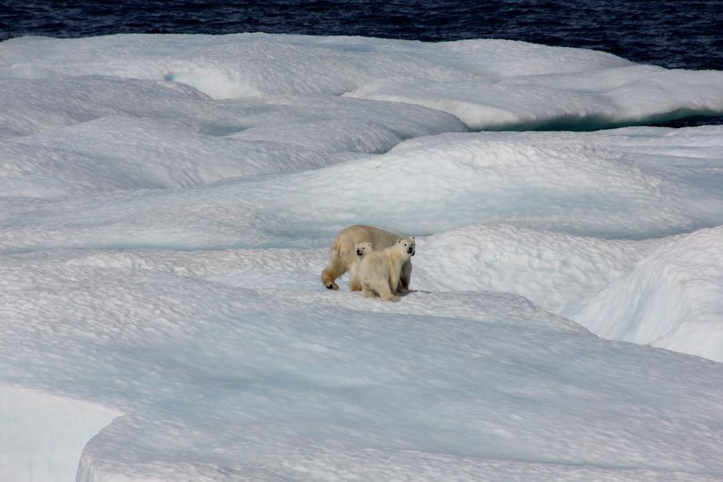 Das Ende der Eisbären